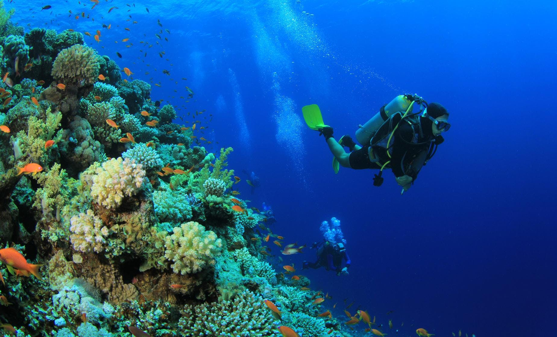 Two Tank Reef Dive