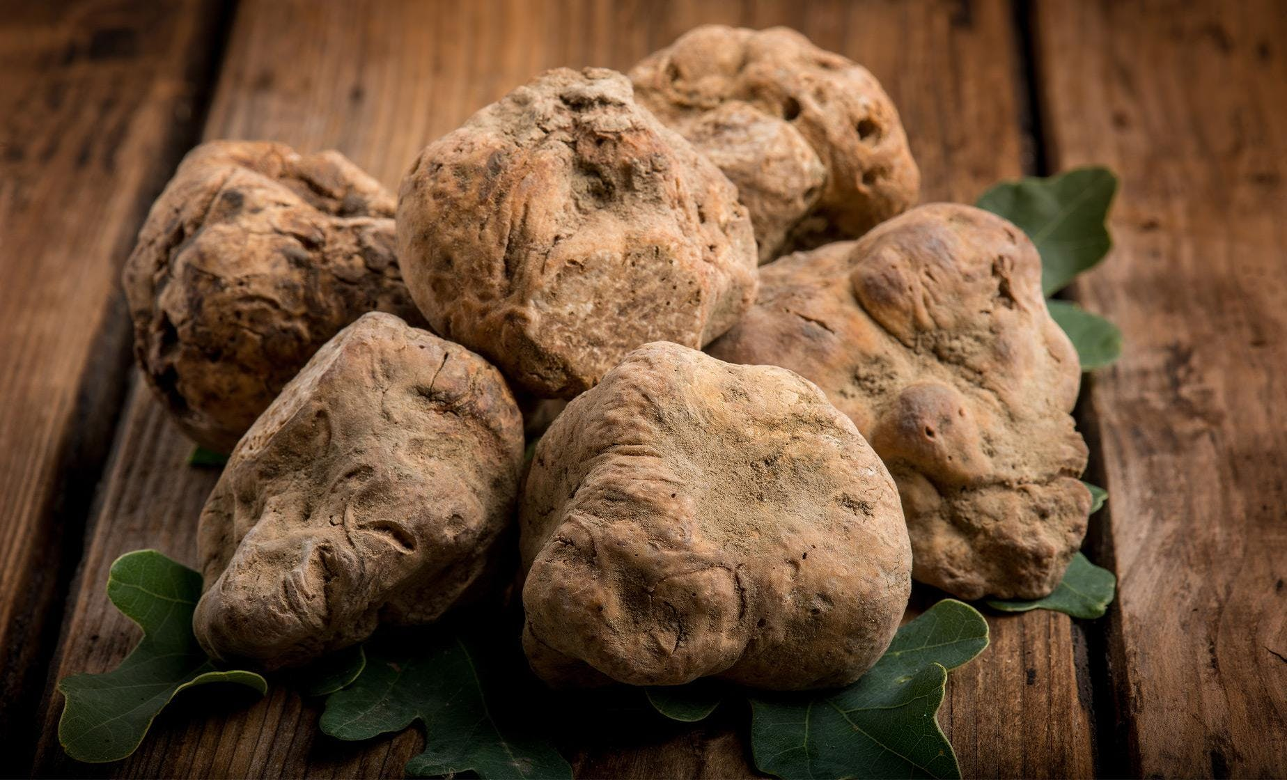 Private Istrian Truffle Hunting